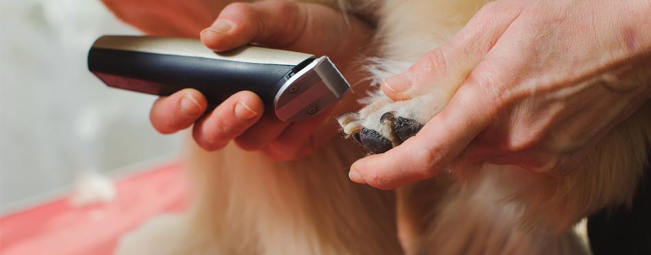best dog grooming kit