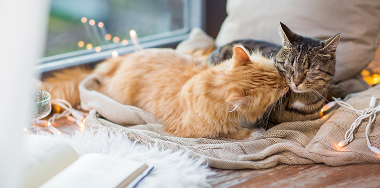 cats lying on window sill with blanket at home