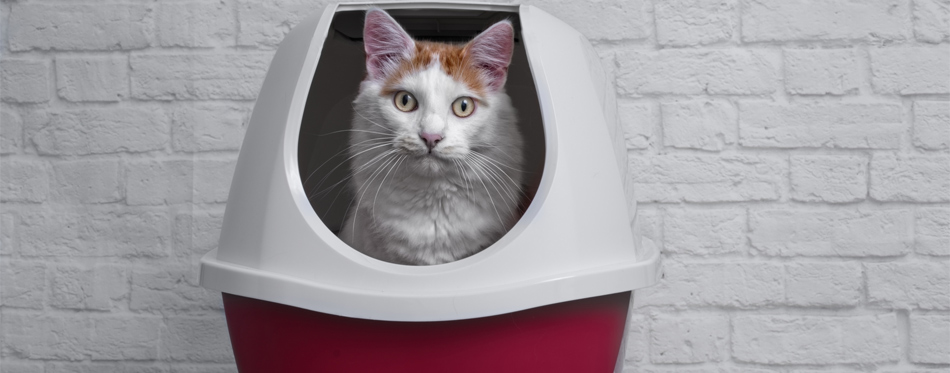 closed litter box