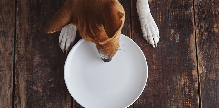 dog eating on a plate