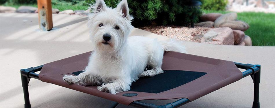 dog lying on dog bed