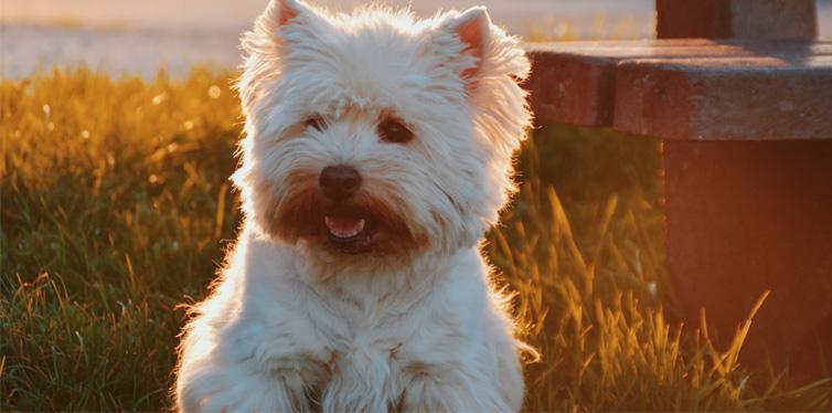dog sitting on grass field beside bench
