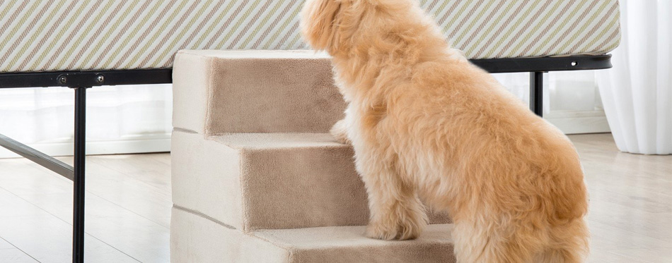 dog using dog stairs