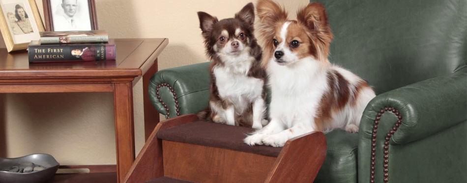 dogs sitting on the arm chair