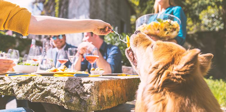 feeding dog outdoor