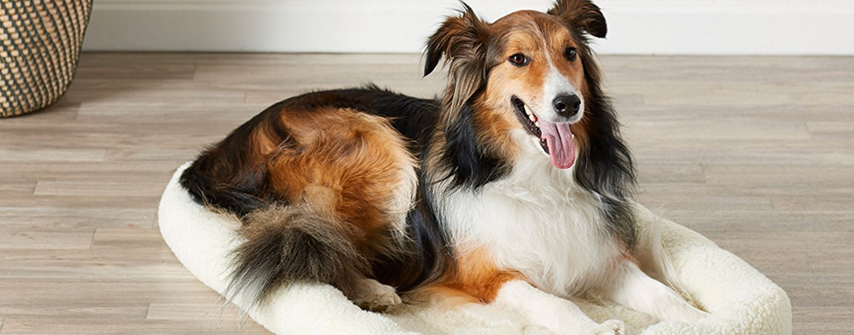 happy dog on bed