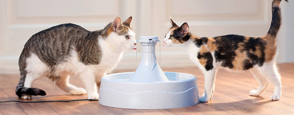 two cats drinking water