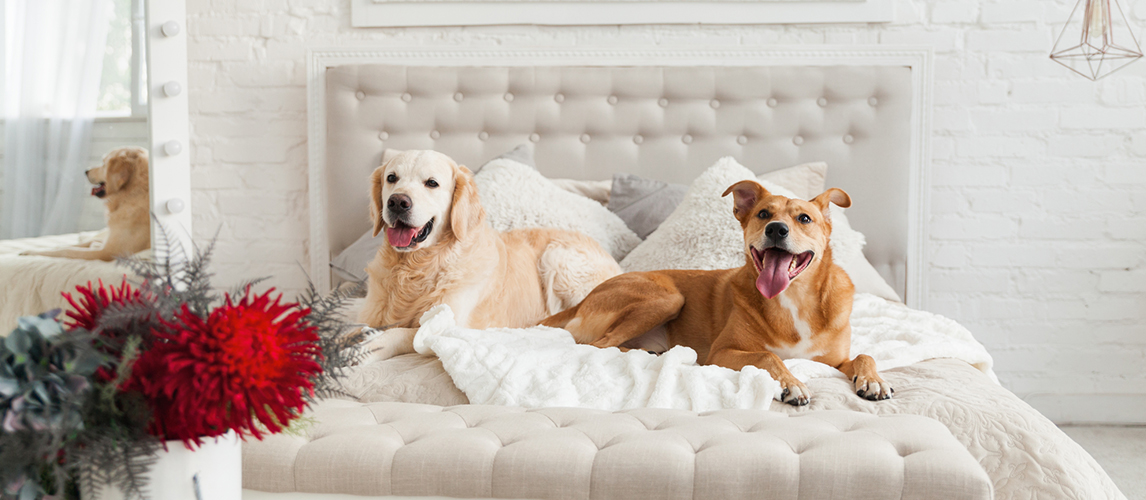 10 Best Pet Friendly Hotel Chains in USA | Pet Side