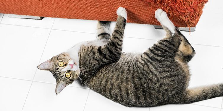 Kitten scratching orange fabric sofa on white floor