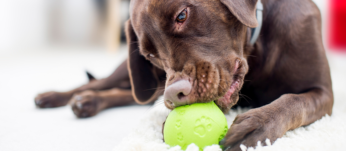 The Best Interactive Dog Toys (Review) in 2019 | Pet Side