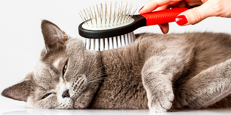 Cat is being combed