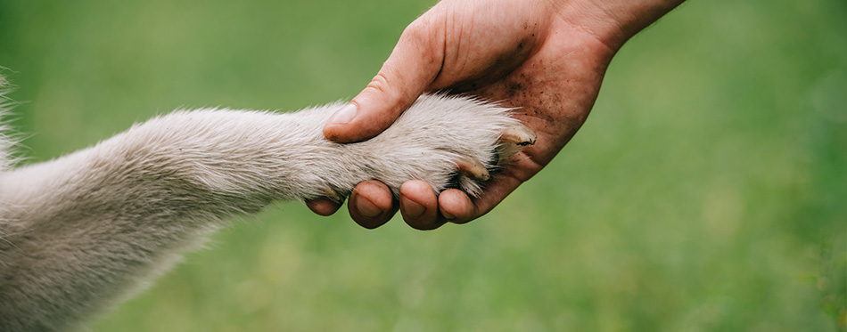 Cropped view of man holding paw of dog