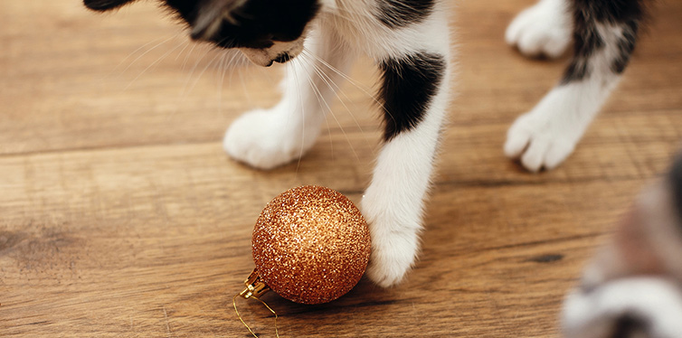 Cute kitty playing with gold baubles on floor