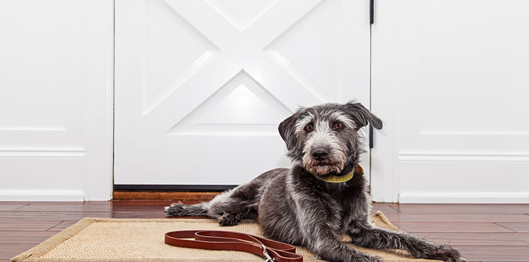 Dog laying down in front of door