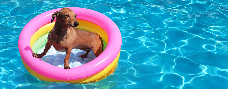https://www.petside.com/wp-content/uploads/2019/02/Dog-on-airbed-in-the-pool.jpg