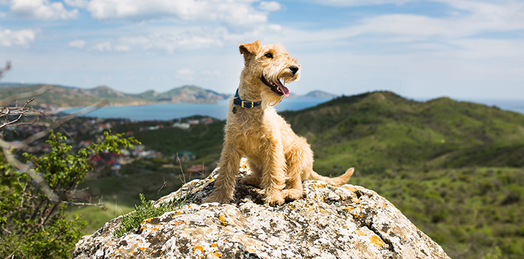 Dog sitting on a rock in the mountains