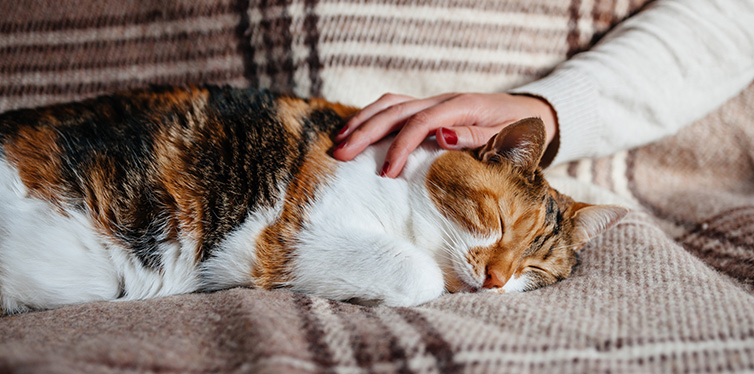 Female hand caressing cute cat sleeping on blanket