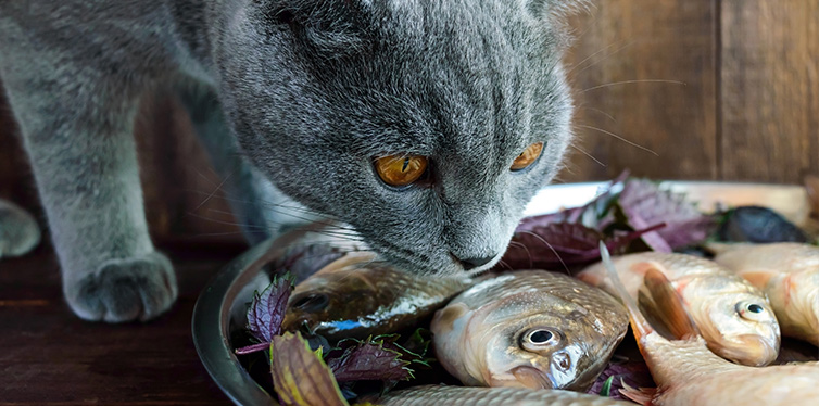 Fresh catch live fish