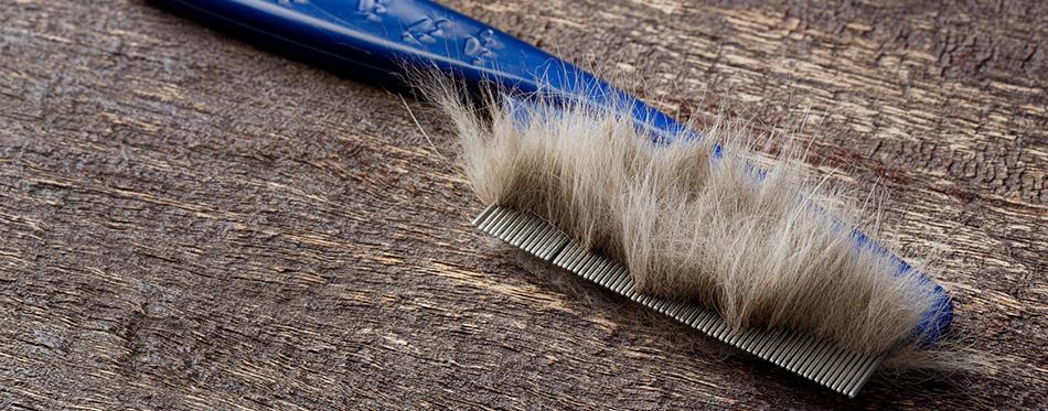 Fur on cat comb
