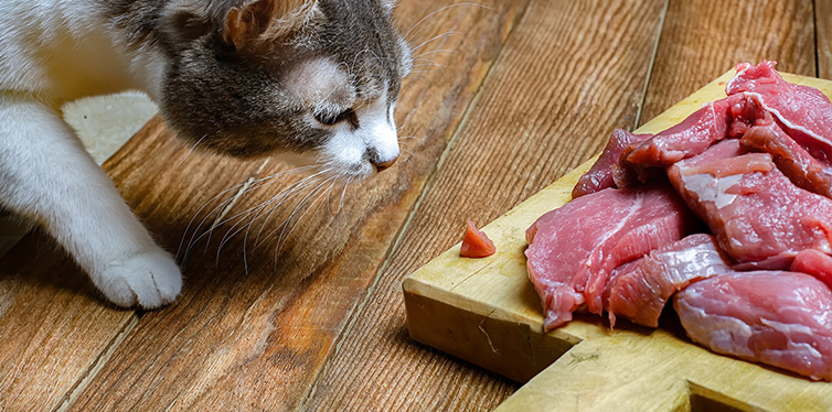 Gray cat steals a piece of fresh meat