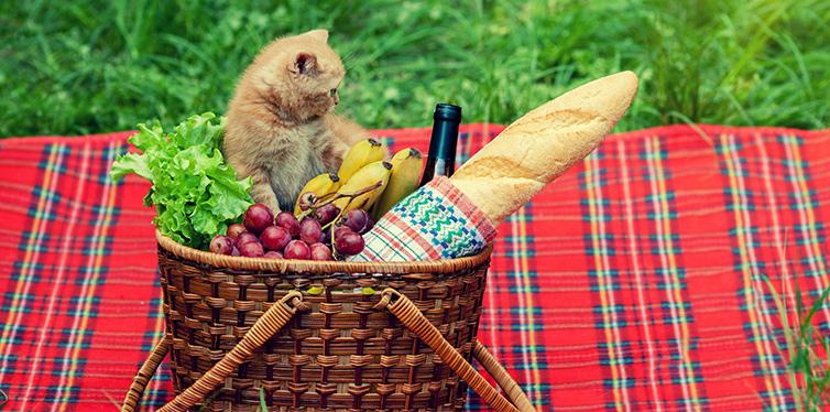 Kitten at picnic