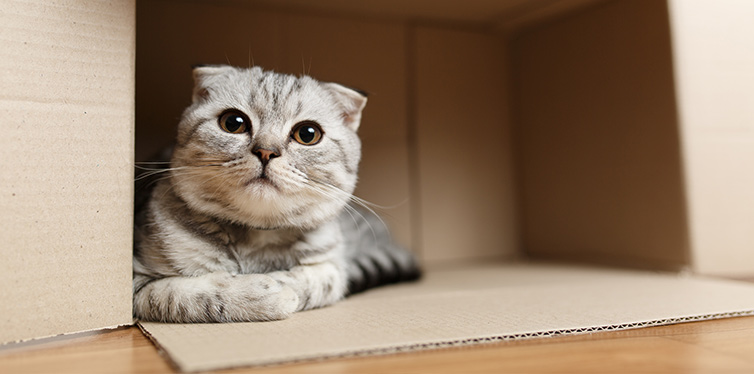 Kitten sitting in a cardboard box