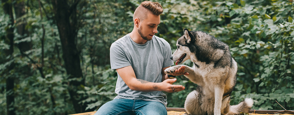 Man holding paw of obedient siberian husky dog