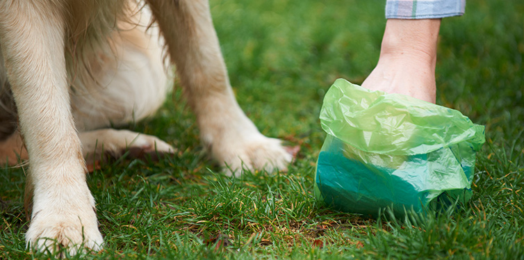 Owner Clearing Dog Mess
