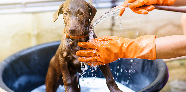 Puppy dog taking shower