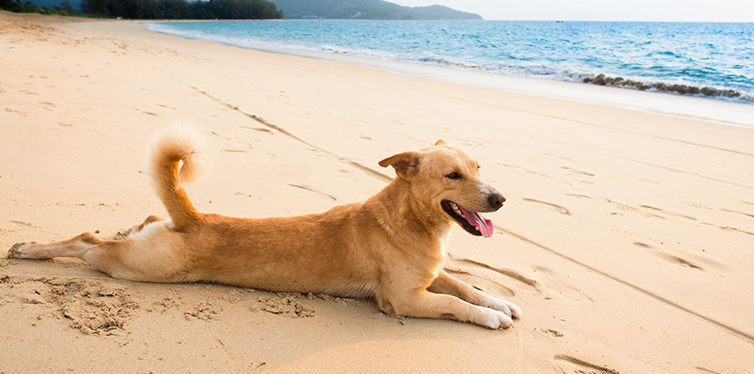 Relaxed dog on tropical beach