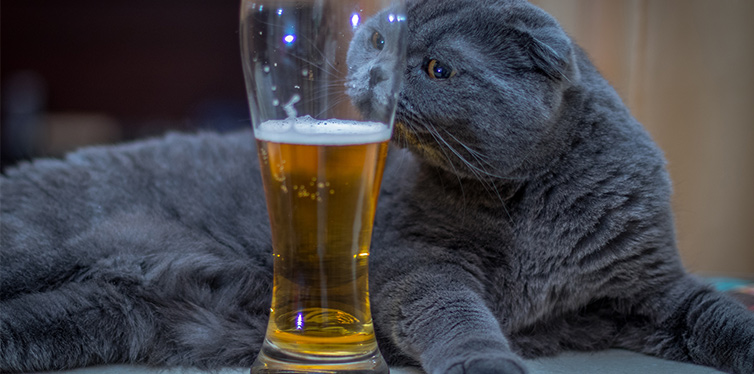 The cat lies with a glass of beer