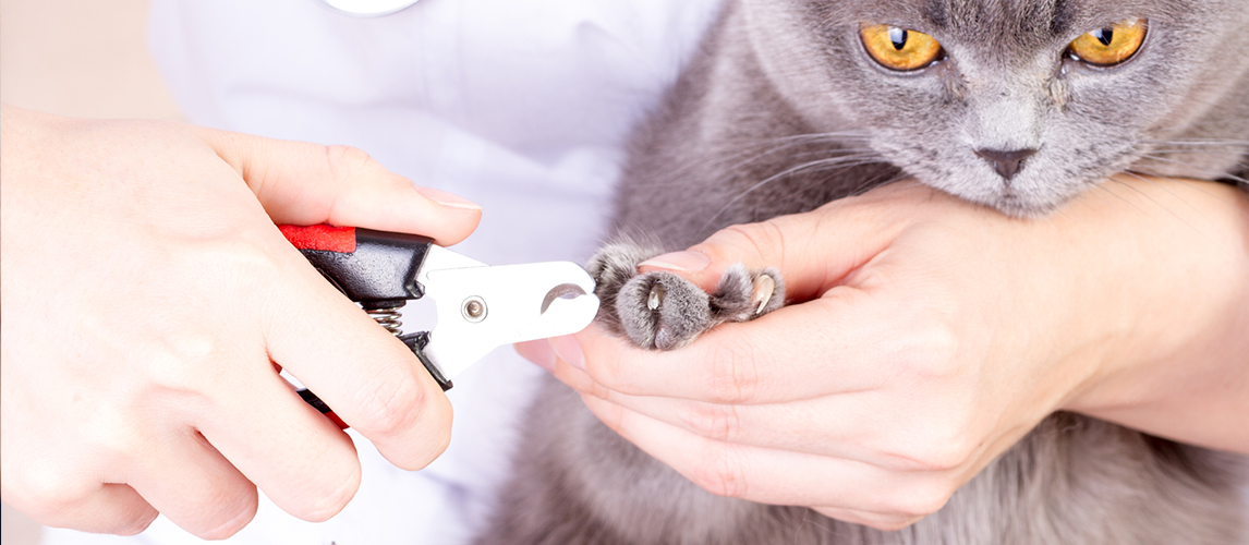 Best USA-Made Trimmer Resco Original Dog and Pet Nail//Claw Clippers Cat Cat Size Red