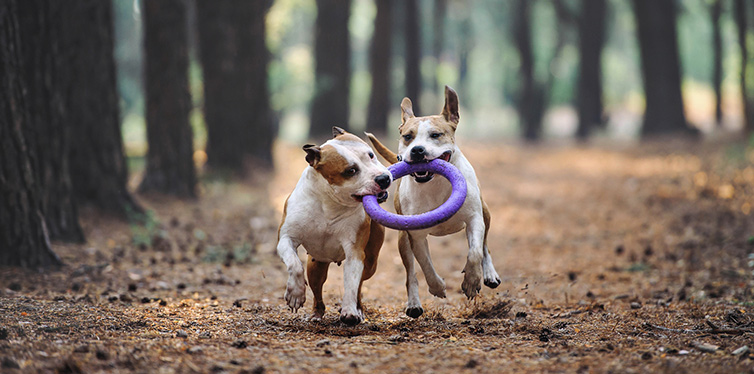 Two beautiful dogs play together