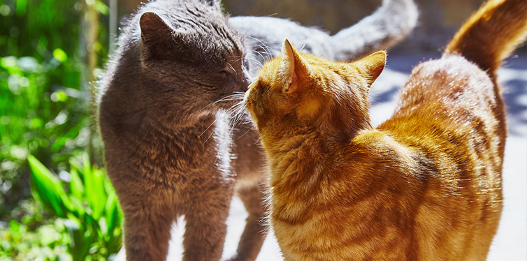 Two cats kissing each other on sun