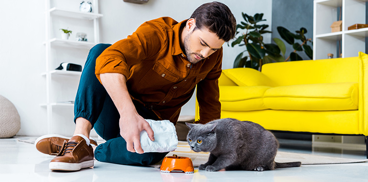 Young man feeding grey british shorthair cat in living room
