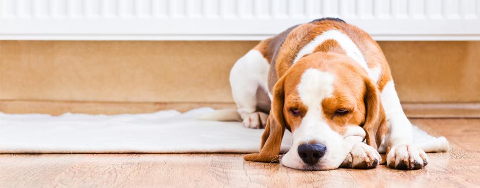 best dog house heater