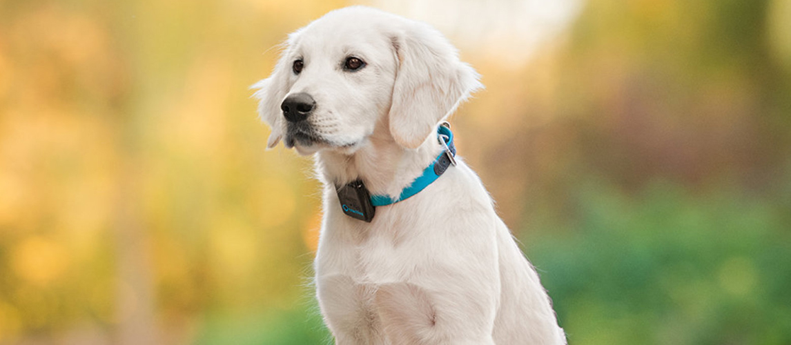 FMP-GPS Find My Pet GPS Tracker Smart Collar for Dogs /& Cats WORLDWIDE TRACKER