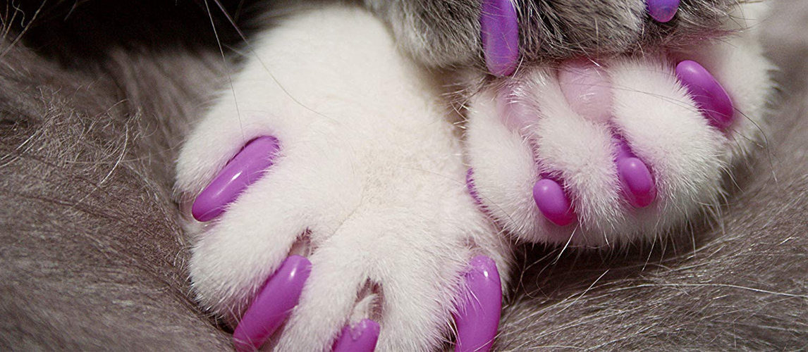 The Best Nail Caps for Cats (Review) in