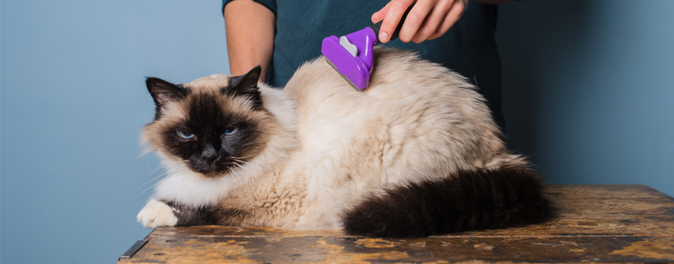brushing cat hair
