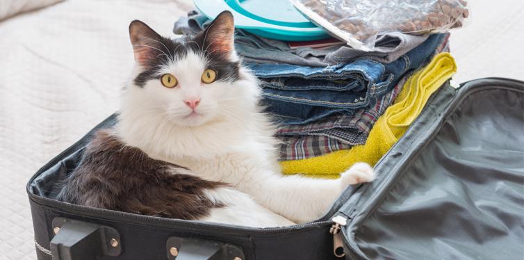 cat in a suitcase