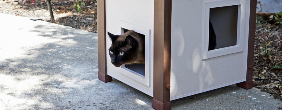 cat inside a pet house