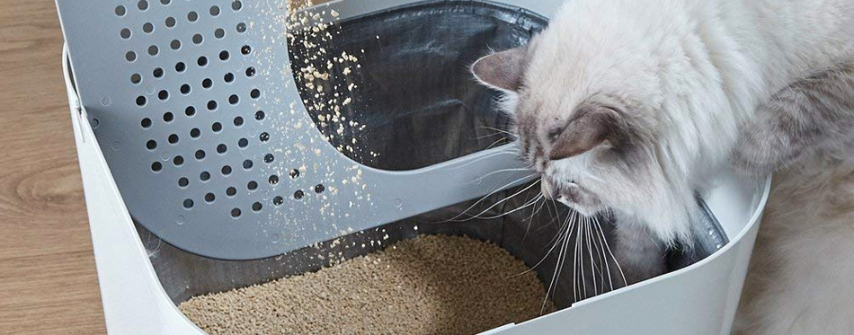 cat looking at litter box