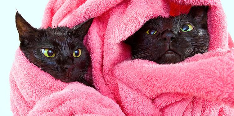 cats after a bath