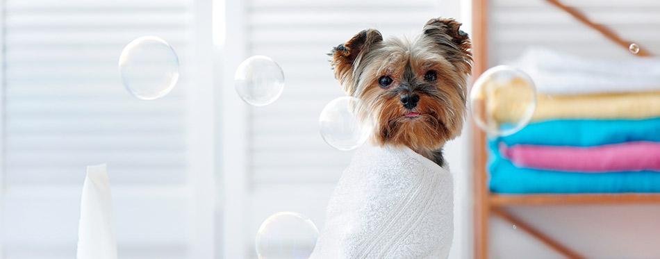 clean puppy