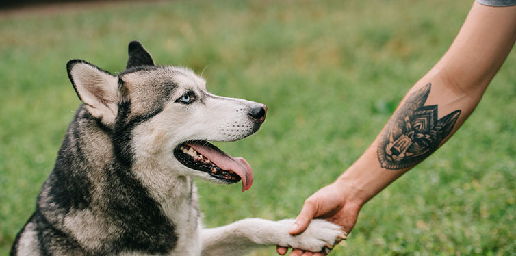 dog giving paw to man