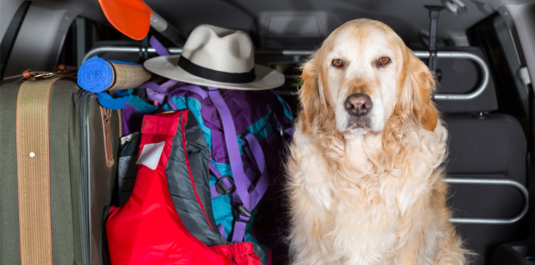 dog going on a trip