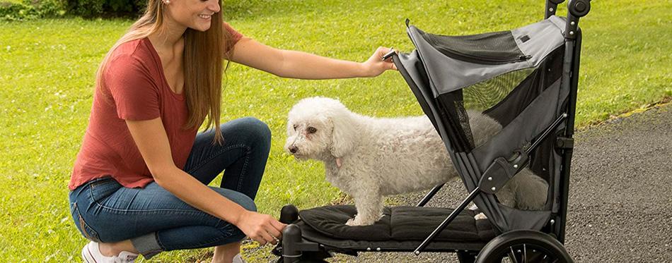 dog in a dog stroller