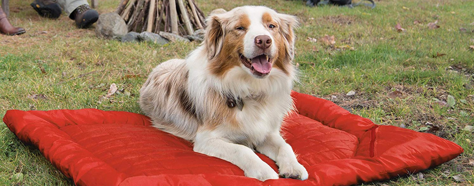 dog on red sleeping bag