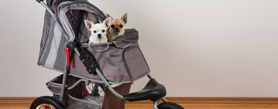 dogs are sitting in comfortable pet stroller