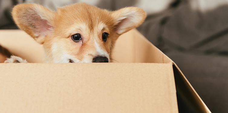 puppy sitting in cardboard box